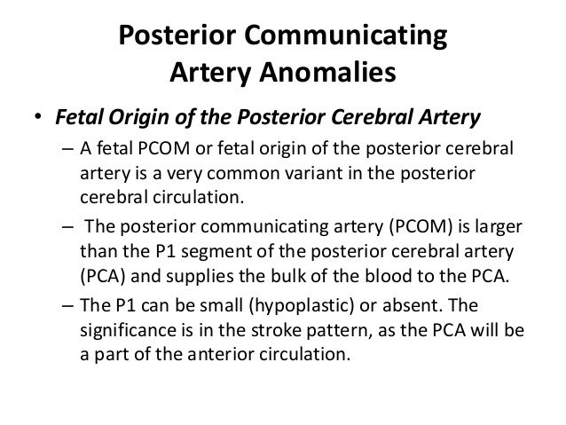 A2 (vertical): from ACOM to the origin of the callosomarginal artery