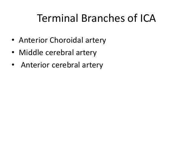 Callosomarginal Pericallosal A2 Segment