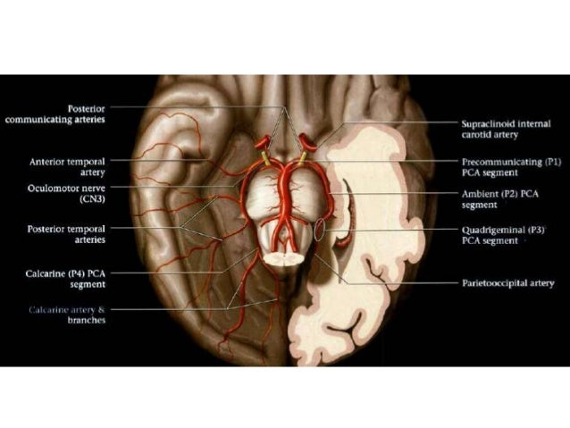 imaging and anatomy of blood supply of brain