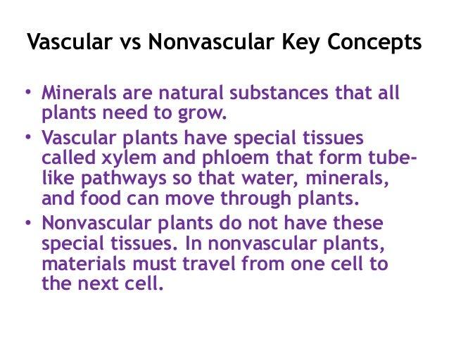 Vascular Conditions