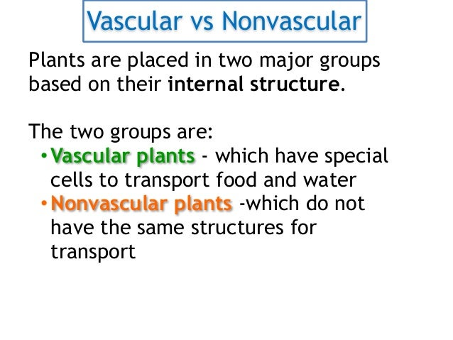 Vascular and Non Vascular Plants – Vascular and Nonvascular Plants Worksheet