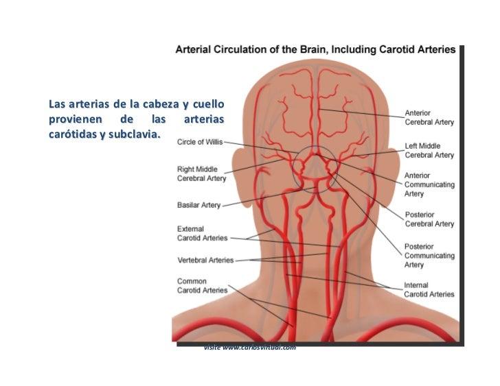 El descenso de la presión a la osteocondrosis los preparados