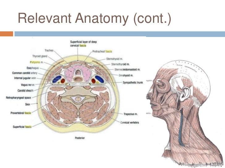 Vascular neck trauma