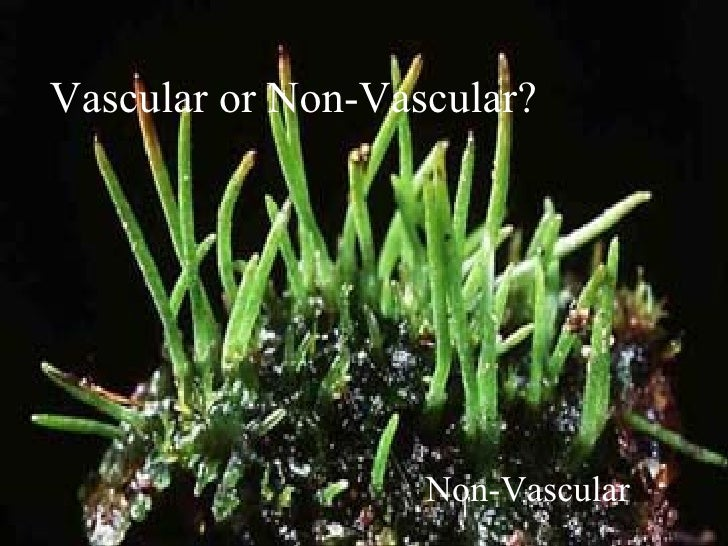 Vascular nonvascular plants – Vascular and Nonvascular Plants Worksheet