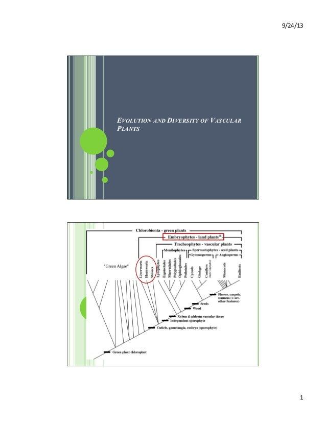 9/24/13   1   EVOLUTION AND DIVERSITY OF VASCULAR PLANTS