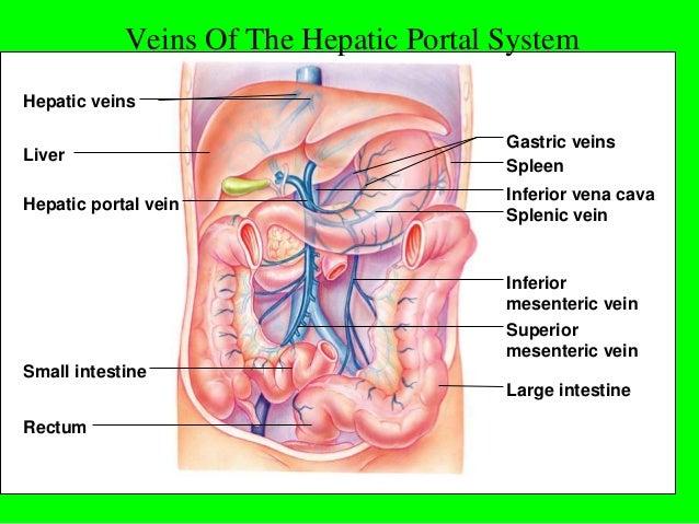 Vascular structure thorax and abdomen. Almas khan Khorfakkhan hospita…