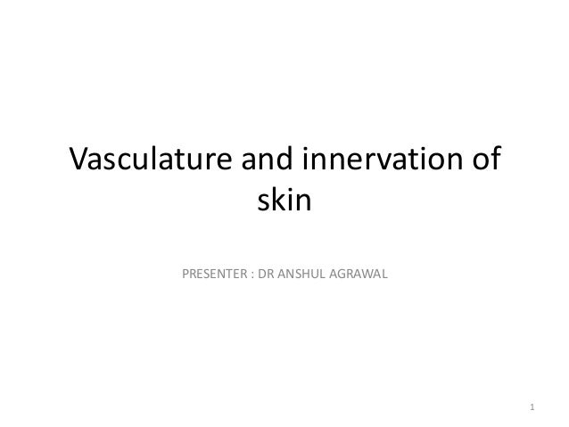 Vasculature and innervation of skin PRESENTER : DR ANSHUL AGRAWAL  1