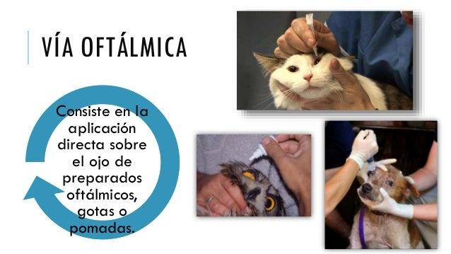 Resultado de imagen para administración via oftálmica en animales