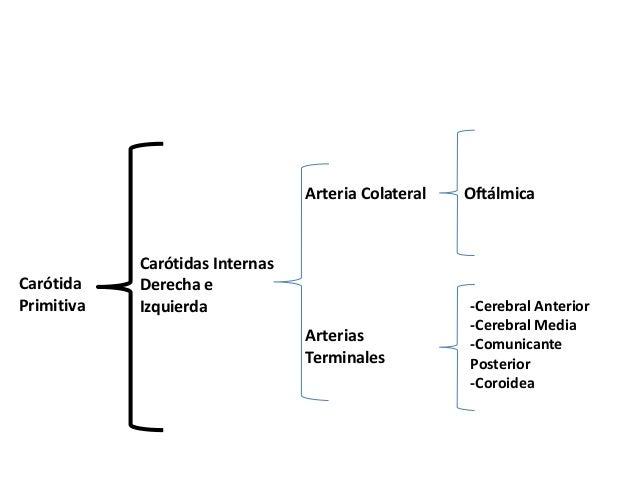 • -Por Detrás: • a) Músculos Prevertebrales y • La Aponeurosis que los Cubre. • b) Neumogástrico • c) Hipogloso Mayor • d)...