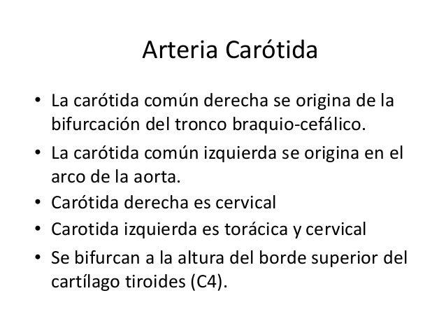 Arteria Carótida • La carótida común derecha se origina de la bifurcación del tronco braquio-cefálico. • La carótida común...