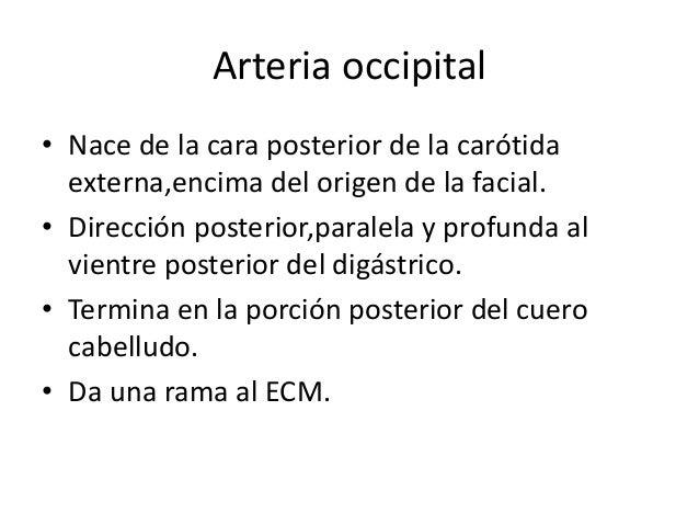 ARTERIA SUBCLAVIA Derecha se origina en tronco braquiocefálico Izquierda en cayado de la aorta. Divide en tres partes: • P...