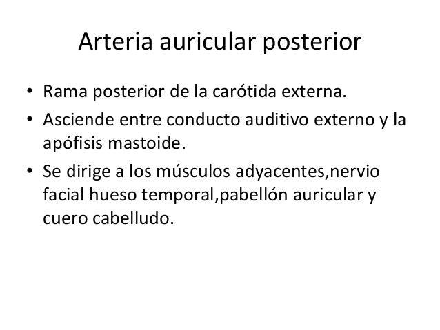 ARTERIA SUBCLAVIA Subclavia derecha: primera porción Detras de articulación esternoclavicular. Subclavia izquierda. Nace e...