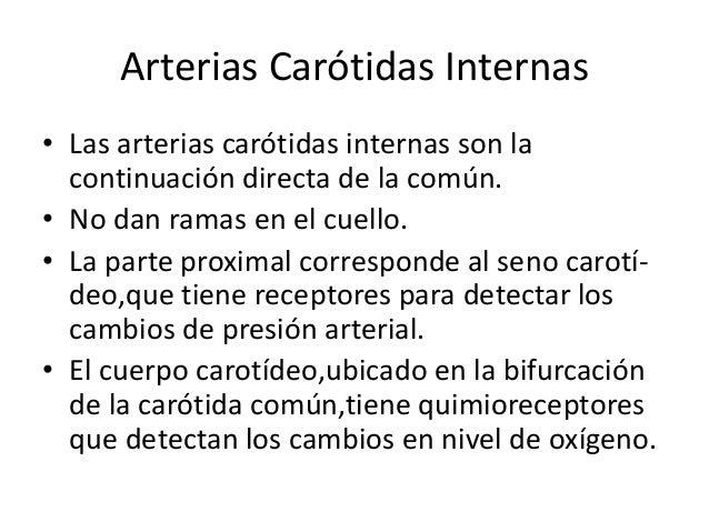 Seno carotídeo Cuerpo carotídeo