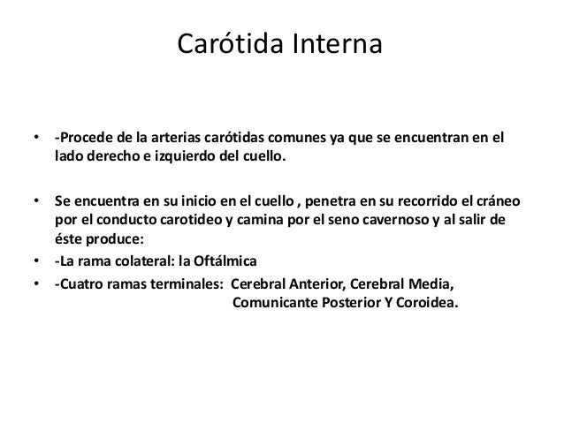 Carótida Primitiva Carótidas Internas Derecha e Izquierda Arteria Colateral Arterias Terminales Oftálmica -Cerebral Anteri...