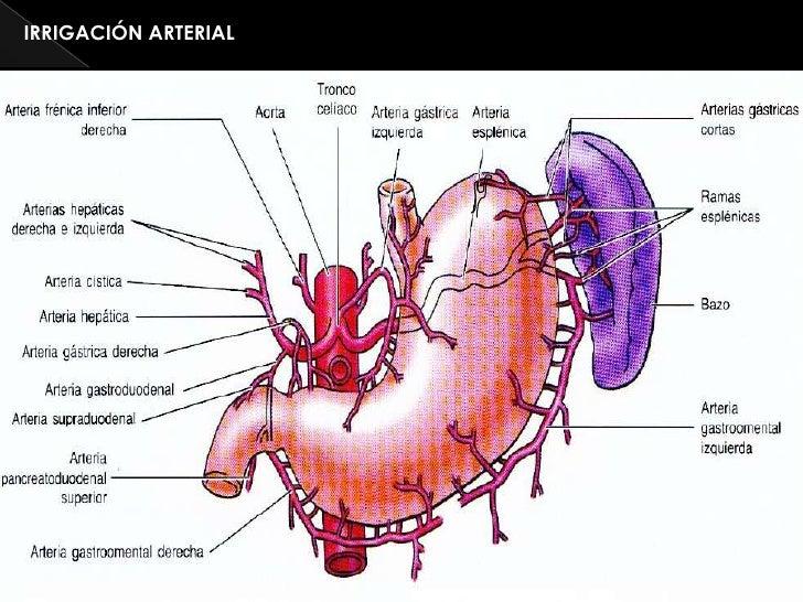 El centro federal vascular de la cirugía de la foto