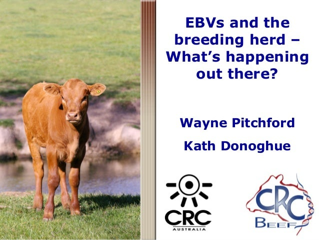 EBVs and the breeding herd – What's happening out there? Wayne Pitchford Kath Donoghue