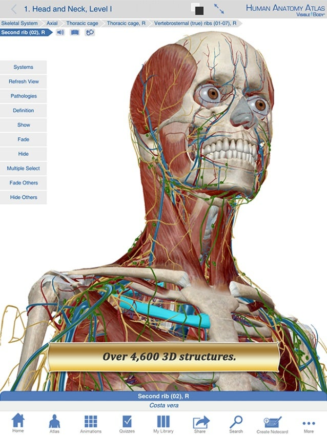 Human Anatomy Atlas 6 Sneak Peek