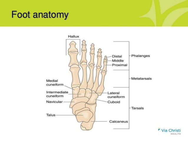 Oh My Aching Feet Presentation By Dr Miki Matsuda