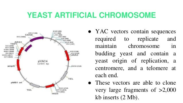 plasmid vector
