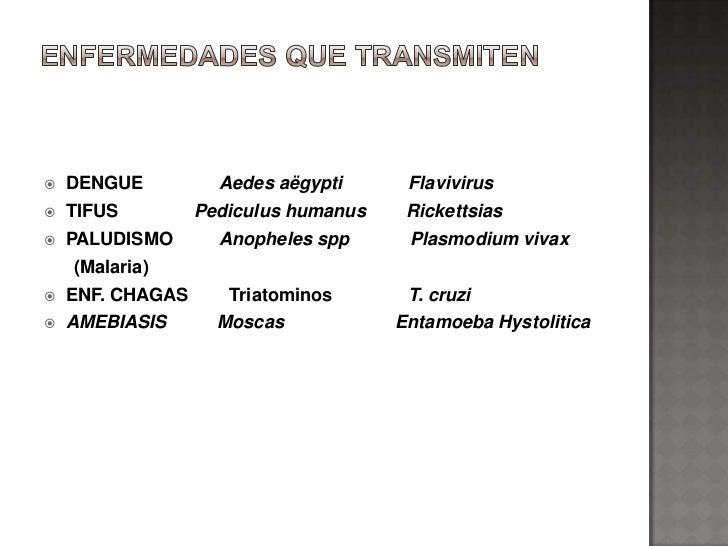    DENGUE          Aedes aëgypti      Flavivirus   TIFUS         Pediculus humanus    Rickettsias   PALUDISMO       Ano...