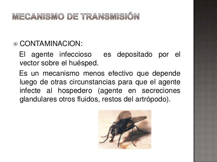    CONTAMINACION:    El agente infeccioso        es depositado por el    vector sobre el huésped.    Es un mecanismo meno...
