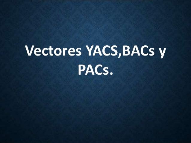 Vectores YACS,BACs y PACs.