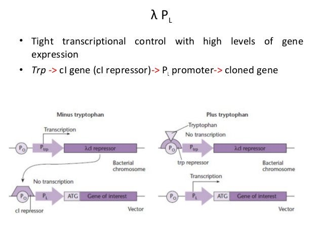 Genetic Elements Essential for Expression