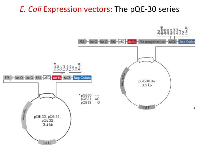 pRSET vectors: pUC-derived expression vectors for high-level expression of recombinant proteins in E. coli