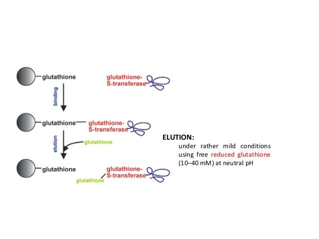 Solubility Tags Several soluble proteins are used as tags to improve folding of the target protein; These act as passive p...