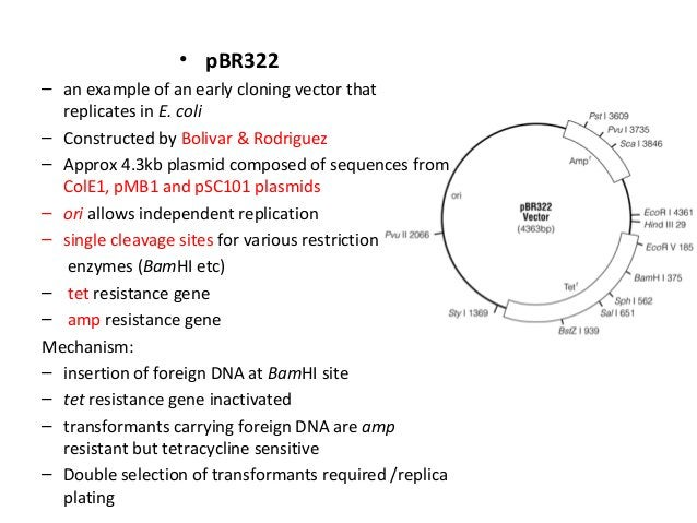 • pBR322 – an example of an early cloning vector that replicates in E. coli – Constructed by Bolivar & Rodriguez – Approx ...