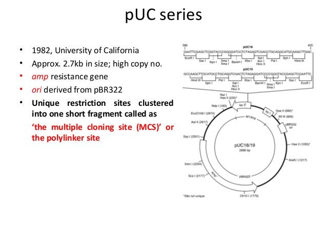 pUC series • • • • •  1982, University of California Approx. 2.7kb in size; high copy no. amp resistance gene ori derived ...