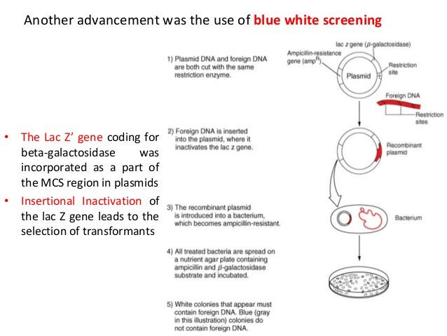Another advancement was the use of blue white screening  •  •  The Lac Z' gene coding for beta-galactosidase was incorpora...