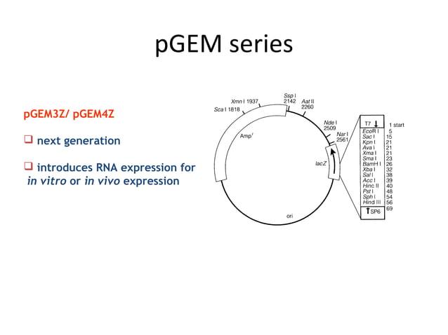 pGEM series pGEM3Z/ pGEM4Z  next generation  introduces RNA expression for in vitro or in vivo expression