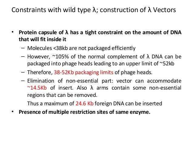 Constraints with wild type λ; construction of λ Vectors • Protein capsule of λ has a tight constraint on the amount of DNA...