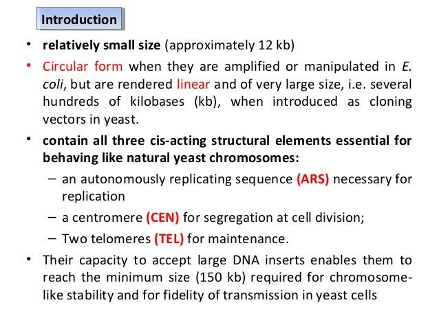 • YACs have several advantages over other large capacity vectors: – accommodation of DNA segments thousands of kilobases i...