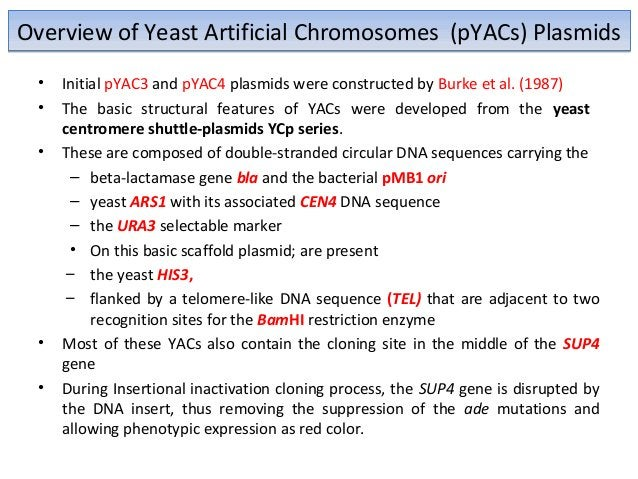 Construction of Yeast Artificial Chromosomes