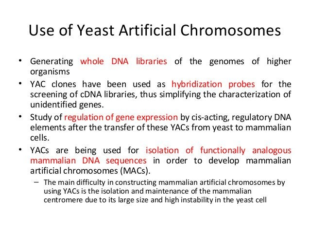 PACs: P1-derived Artificial chromosome To overcome some of the problems associated with YAC systems To overcome some of th...