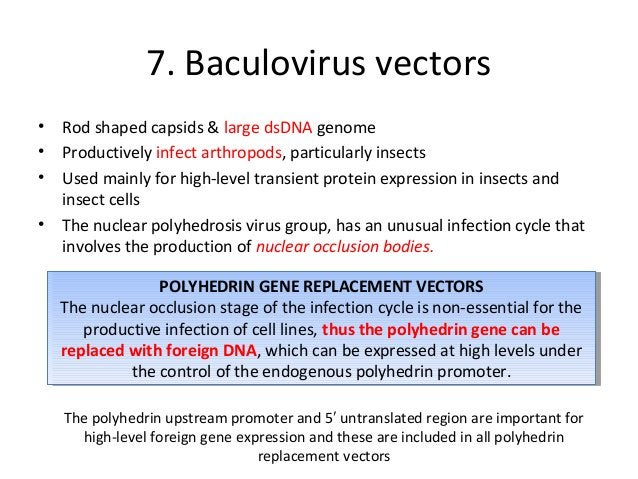Construction of baculovirus expression vectors • Inserting the transgene downstream of the polyhedrin promoter • achieved ...