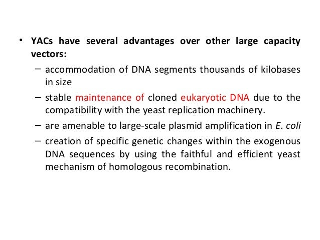 What are the advantages of DNA replication?