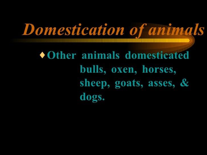 Domestication of animals <ul><ul><ul><li>Other animals domesticated  bulls, oxen, horses,  sheep, goats, asses, &  dogs. <...