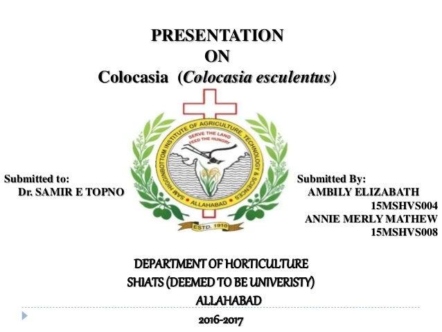 PRESENTATION ON Colocasia (Colocasia esculentus) DEPARTMENTOF HORTICULTURE SHIATS (DEEMEDTO BE UNIVERISTY) ALLAHABAD 2016-...