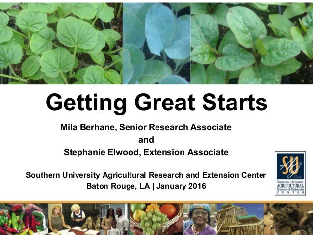 Getting Great Starts Mila Berhane, Senior Research Associate and Stephanie Elwood, Extension Associate Southern University...