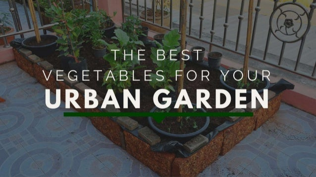 The Best Vegetables For Your Urban Garden