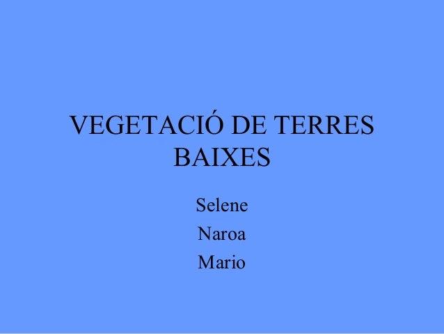 VEGETACIÓ DE TERRES      BAIXES       Selene       Naroa       Mario