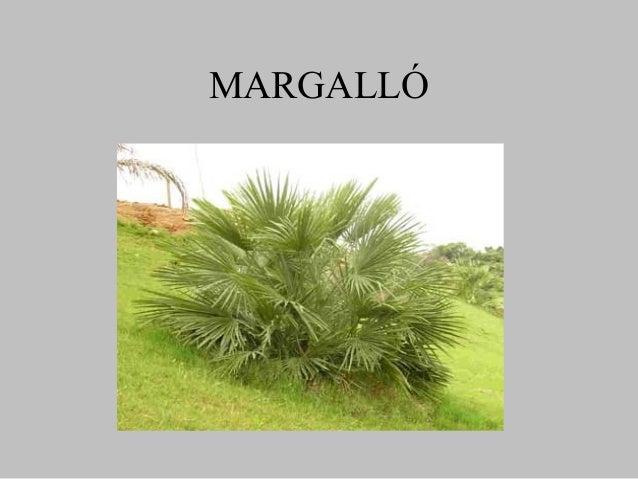 MARGALLÓ