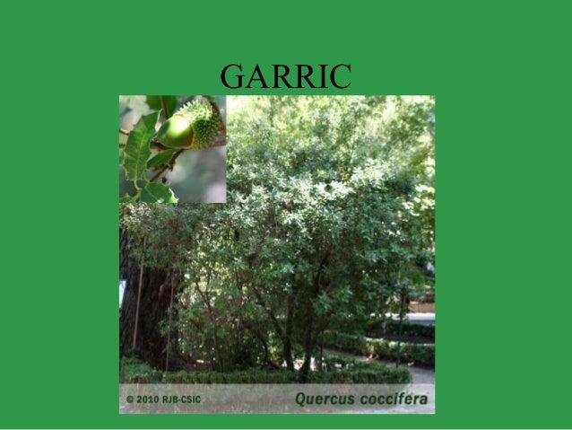 GARRIC
