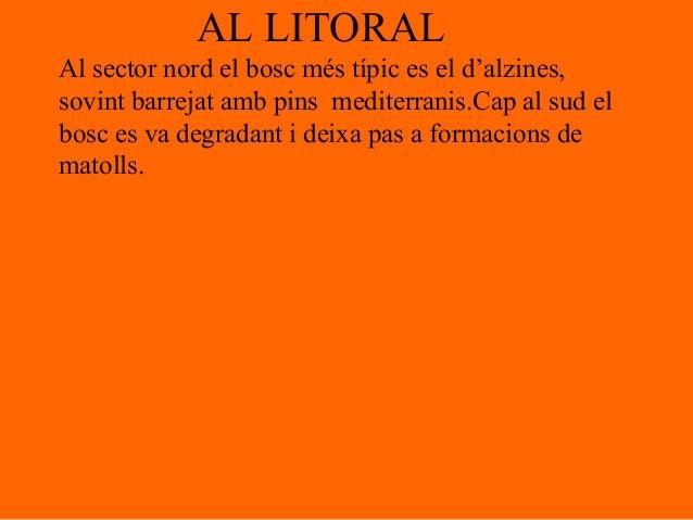 AL LITORALAl sector nord el bosc més típic es el d'alzines,sovint barrejat amb pins mediterranis.Cap al sud elbosc es va d...