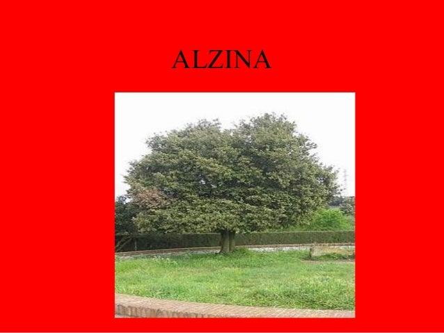 ALZINA