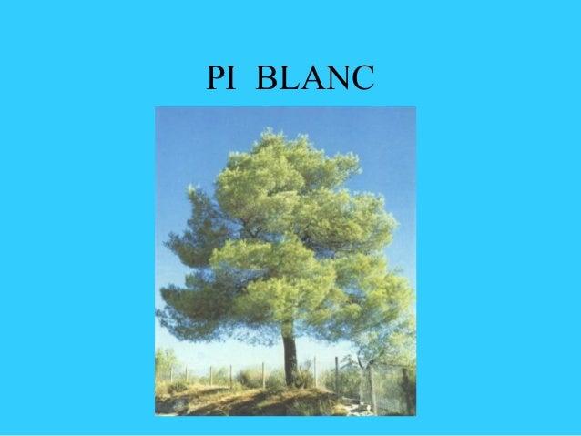 PI BLANC