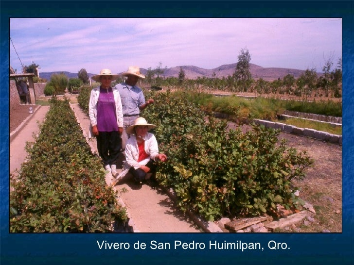 Vegetaci n de cuitzeo arquitectura for Vivero online mexico